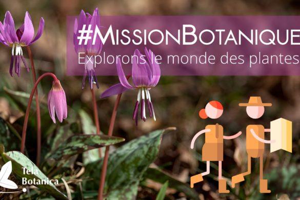 Bannière de l'événement Mission Botanique